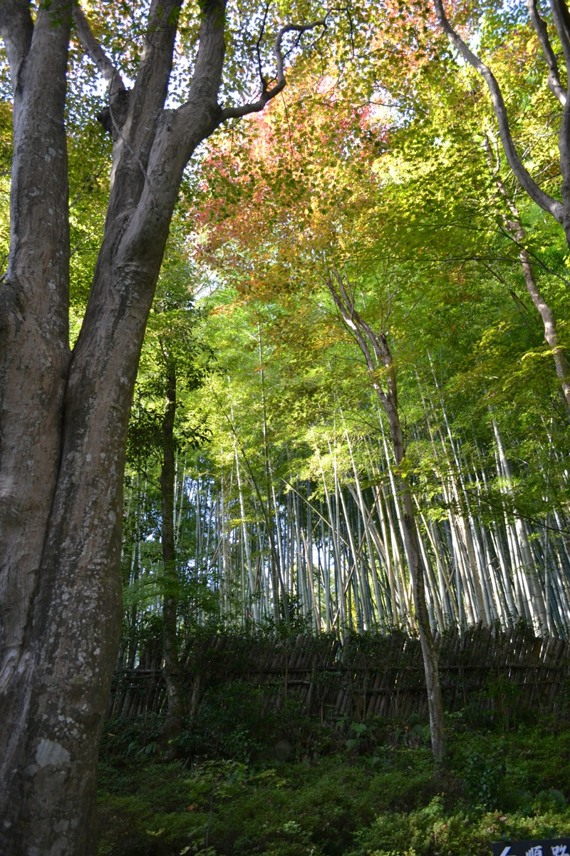 Kyorinbo Bamboo Woods
